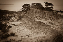 Pictures of Torrey Pines State Natural Reserve