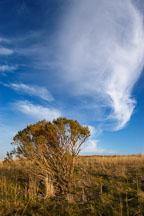 Russian Ridge Open Space Preserve. California. - Photo #3402