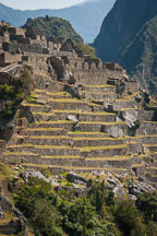 Terraces. Machu Picchu, Peru. - Photo #10120