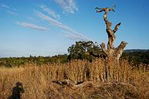 Arastradero preserve, California, USA. - Photo #7822
