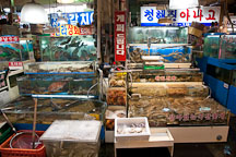 Live seafood displayed in tanks. Noryangjin Fish Market, Seoul. - Photo #21205