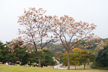 Seoul's Olympic Park is lush with trees and greenery, attracting many visitors throughout the year. - Photo #21694