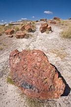 Petrified tree stump. Giant Logs trail, Petrified Forest NP, Arizona. - Photo #17923