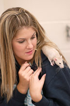 A volunteer provides a perch for a pet rat.The Wonderful World of Rats, San Mateo, California, USA. - Photo #6023