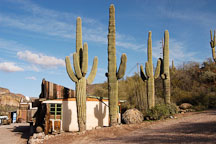 Tortilla Flat and saguaro cactii. Tortilla flat, Arizona, USA. - Photo #5623