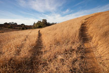 Two paths through grass fields. Arastradero preserve, Palo Alto, California. - Photo #22303