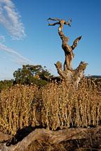 Arastradero preserve, California, USA. - Photo #7824