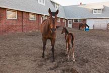 Horse barn at Iowa State University. - Photo #32324