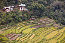 Farmhouses and rice terraces. Punakha, Bhutan. - Photo #23217