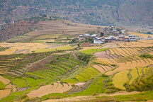 Farmhouses in Punakha and rice fields. - Photo #23230