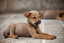 Puppy lying on the stones at Khamsum Yuelley Namgyal Chorten. Punakha Valley, Bhutan. - Photo #23383