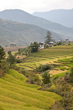 Terraced rice paddies and farmhouses. Punakha, Bhutan. - Photo #23236