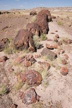 Fractured petrified tree. Giant Logs Trail, Petrified Forest, Arizona. - Photo #17925