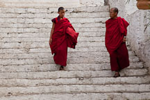 Monks walking down the steps of Punakha Dzong. - Photo #23425