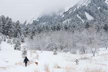 Man walking dog in  Chatauqua Park during the winter. Boulder, Colorado. - Photo #33125