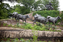 Cattle drive sculptures. Pioneer Plaza, Dallas, Texas. - Photo #24767