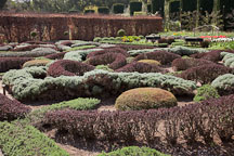 Knot Garden at Filloli. - Photo #24566