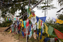 Prayer flags on the trail to Taktshang. Paro valley, Bhutan. - Photo #24059