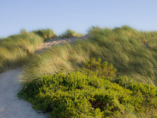 Blowing grasses at Limantour beach. Point Reyes, California. - Photo #25523