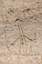 Anthropomorphic petroglyph. Petroglyph Point, California. - Photo #27239