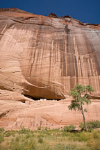 Tree and White House Ruin. Canyon de Chelly NM, Arizona. - Photo #18229