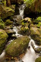 Mossy rocks and Trillium Falls. Redwood National Park, California. - Photo #28845