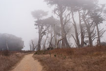 Dirt path and fog at Tomales Point, Point Reyes National Seashore, California. - Photo #1763