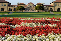 Flowers in the oval. Stanford, California. - Photo #1931