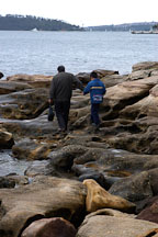 Father and son walking over the rocky shore near Mrs. Macquaries point. Sydney, Australia. - Photo #1637