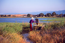 Woman painting. Palo Alto Baylands, California, USA. - Photo #1172