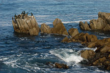 Cormorants. Monterey, California, USA. - Photo #5103