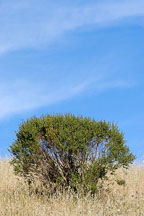 Russian Ridge Open Space Preserve. California, USA. - Photo #4330