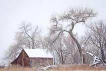 Doran Barn during snowfall. Boulder, Colorado. - Photo #33130