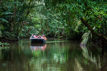 Tourists travel by boat through the canals of Tortuguero National Park. Costa Rica. - Photo #13930
