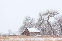 Doran Barn on South Boulder Creek Trail. Boulder, Colorado. - Photo #33131