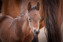 Foal and mare. ISU horse barn. - Photo #32334
