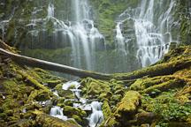 Mossy rocks at the base of Lower Proxy Falls. Oregon. - Photo #27935