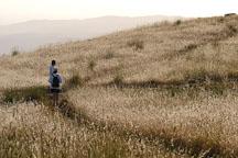 Hikers at Russian Ridge Open Space Preserve. California, USA. - Photo #4335