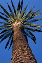 Palm tree. Los Angeles, California, USA - Photo #35