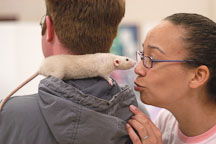 Touching noses with a pet rat. The Wonderful World of Rats, San Mateo, California, USA. - Photo #6036