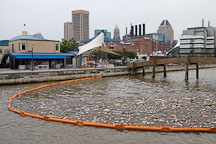 Garbage in the Inner Harbor. Baltimore, Maryland, USA. - Photo #3937