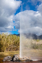 Old Faithful Geyser of California. Calistoga, California - Photo #32037