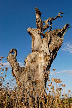 Arastradero preserve, California, USA. - Photo #7838