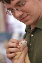 Volunteer Justin Harvey scratches a pet rat. The Wonderful World of Rats, San Mateo, California, USA. - Photo #6038