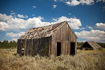 Dilapidated shed. Whitney, Oregon. - Photo #27804