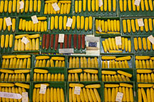 Corn competition. Iowa State Fair, Des Moines. - Photo #33042