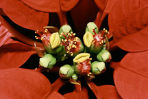 Pictures of Euphorbia