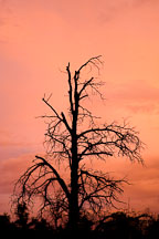 Silhouette of tree on Bell Rock Pathway. Sedona, Arizona. - Photo #17843