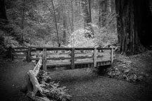 Wood bridge at Armstrong Redwoods park. - Photo #32043