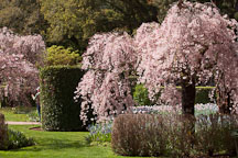 Pictures of Filoli Gardens